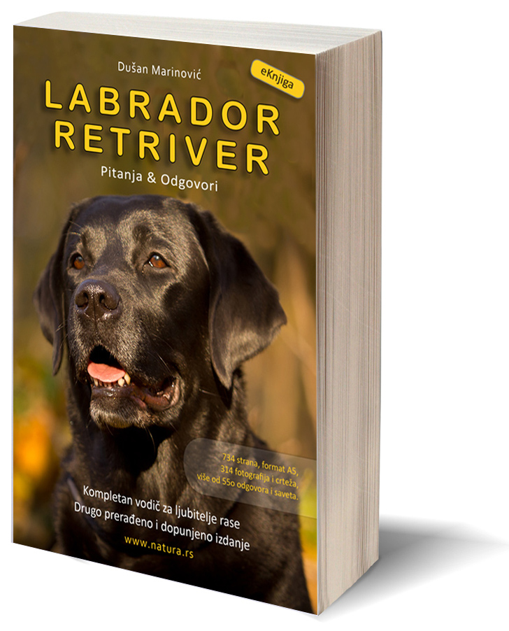 Labrador Retriver 3D Cover